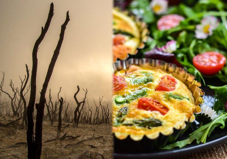Dieta vegana: salvadora do planeta ou pura falácia?