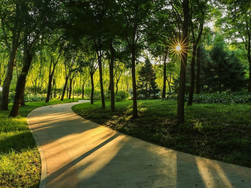 """Después del """"temporal lluvioso"""" los bosques se han humedecido"""