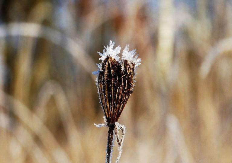 Retour des gelées ce week-end dans de nombreuses régions.