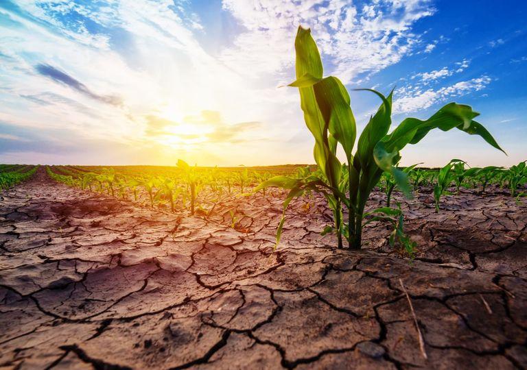 Dürre Frühling