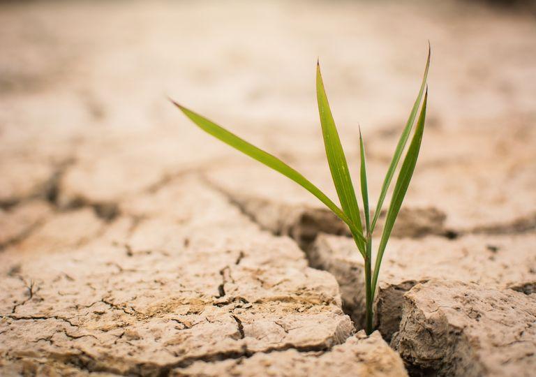 Dürre im Frühling