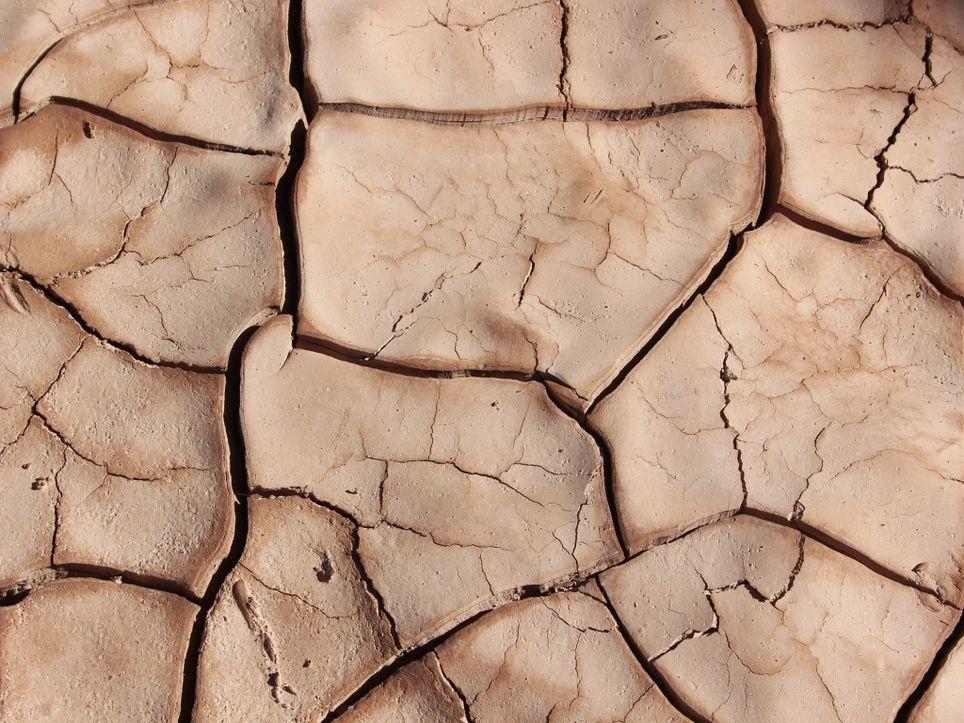 Dürresommer 2019