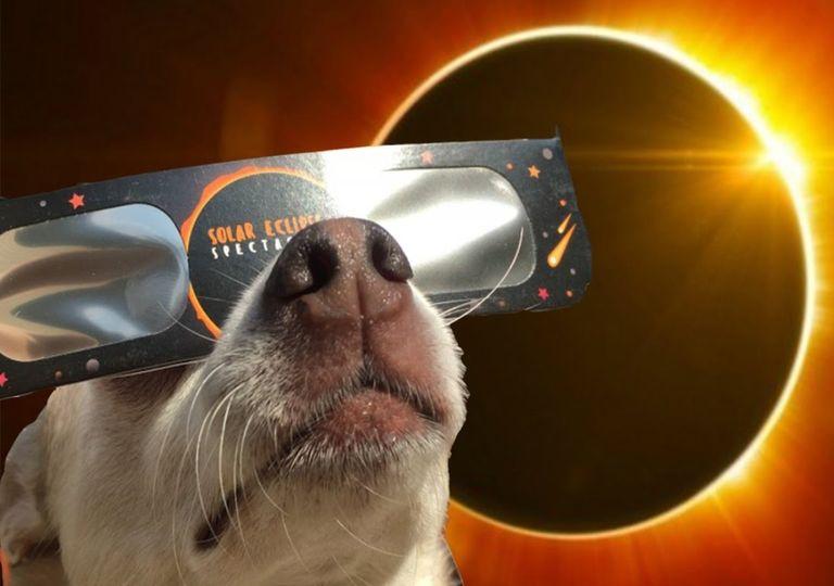 Perro animales Eclipse solar total