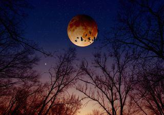 Eclipse lunar penumbral será visível em Portugal esta sexta-feira