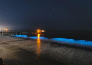 ¡Han vuelto las olas bioluminiscentes! También debido a la cuarentena