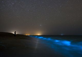Quarantine effect: bioluminescent waves return