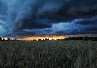 El alivio de las lluvias en un momento clave
