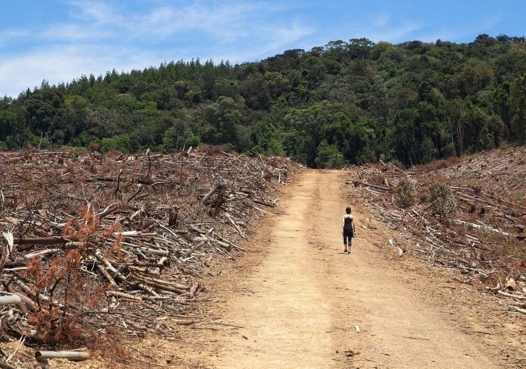 amazonas, deforestacion, dioxido de carbono