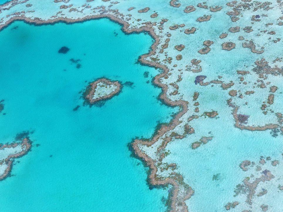 Los corales se pueden recuperar después de periodos de blanqueamiento, sin embargo, a medida que el periodo de exposición y la severidad incrementan, así también incrementa la mortalidad de los corales.
