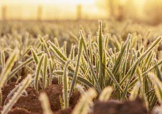 El calor sigue, pero el campo 'tiembla' ante posibles heladas tardías