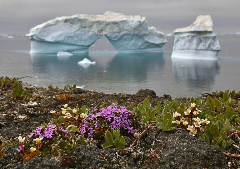 Groenlandia ecosistema