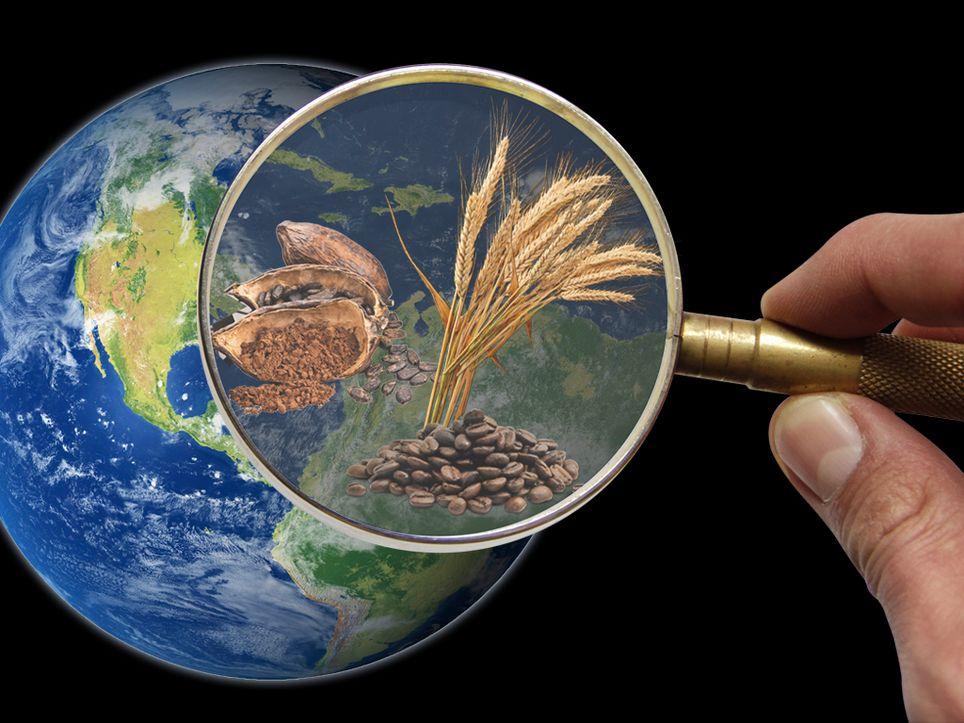 Cambio Climático, cultivos que se extinguen
