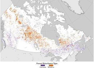 El cambio forestal en Canadá: bosques, incendios y cosechas
