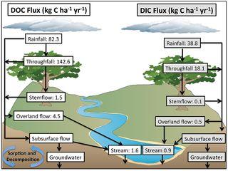 El ciclo del carbono tiene una nueva dimensión