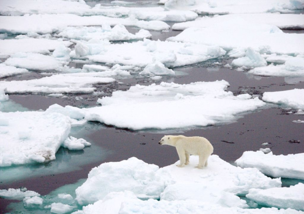 The Arctic.