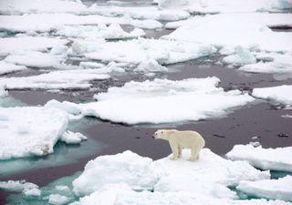 Scioglimento del ghiaccio artico, superato il punto di non ritorno