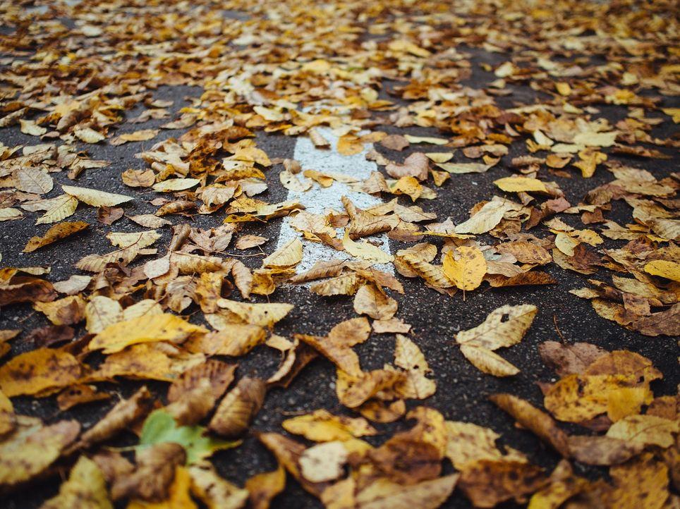Los sopladores de hojas son especialmente frecuentes, e intensos, en esta época del año.