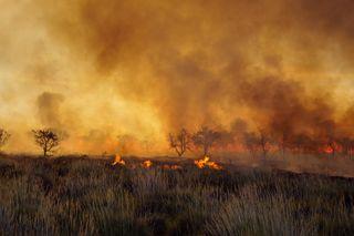 Incendios en Australia: más de 1 millón de hectáreas calcinadas