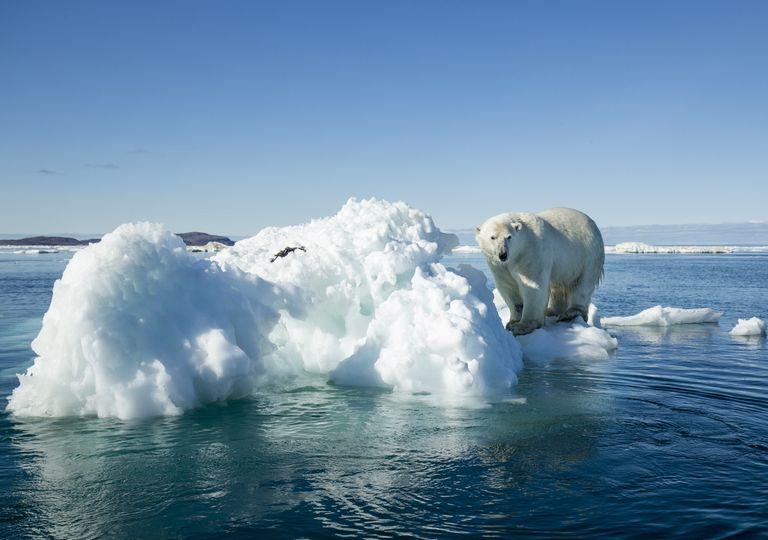 La quantité de glace de mer qui flotte dans l'océan Arctique à la fin de l'été a diminué d'environ 13% par décennie depuis 1979.