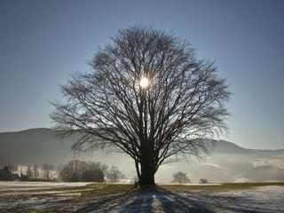 El solsticio de invierno, Santa Lucía y la noche más larga del año