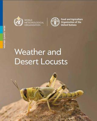 El tiempo y la langosta del desierto