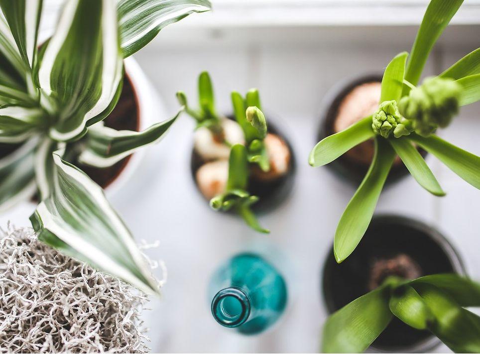 Evita poner las plantas directamente al sol, presta atención a sus necesidades.