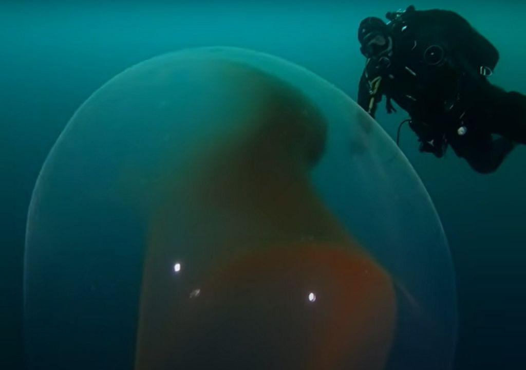 Il diametro di una grande massa di uova può raggiungere un metro.