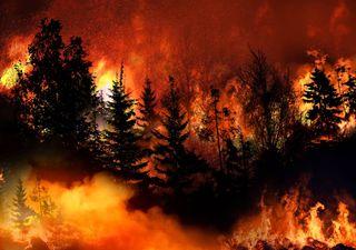 Enormes incendios en Estados Unidos crean caos y causan estragos