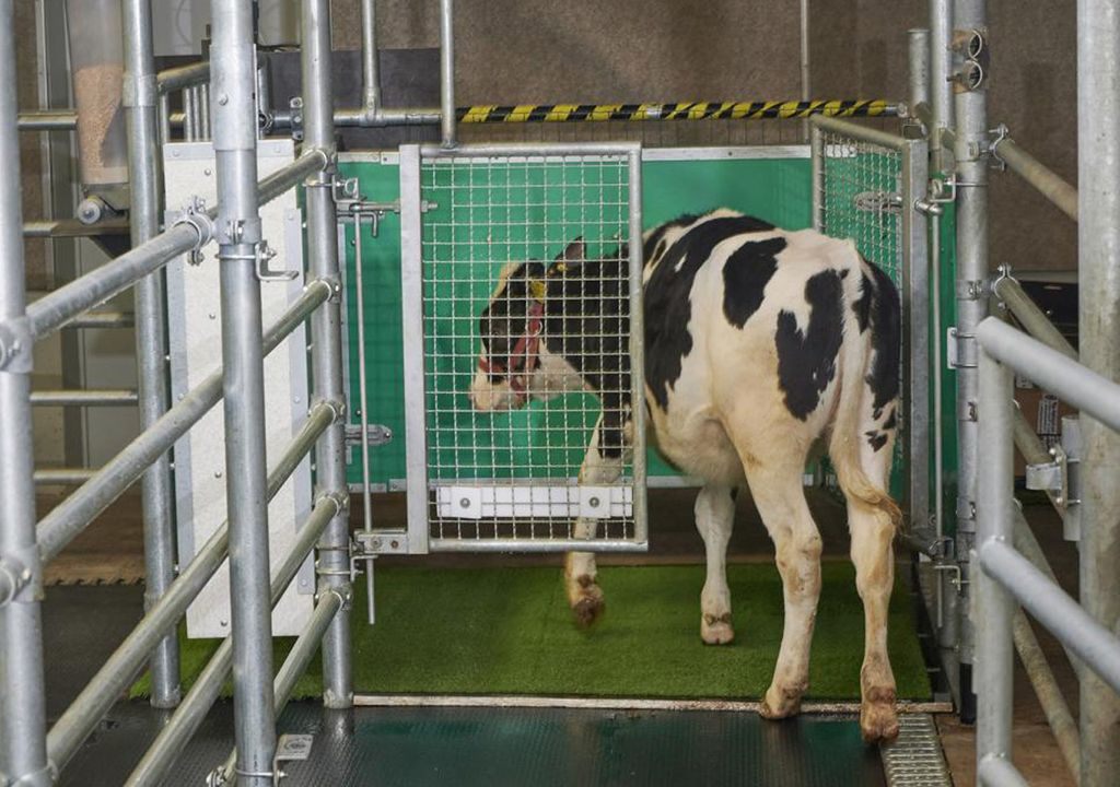 GEI vaca metano MooLoo