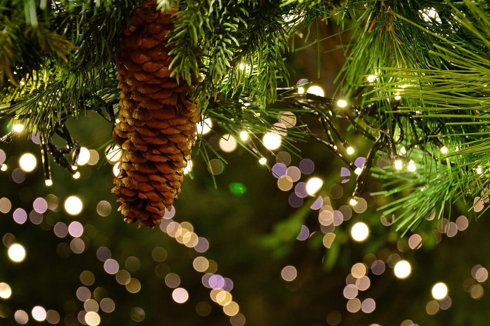 Environnement Comment Choisir Son Sapin De Noël