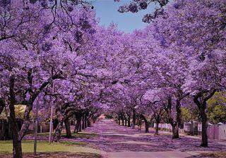 Equinoccio de septiembre: llega la primavera