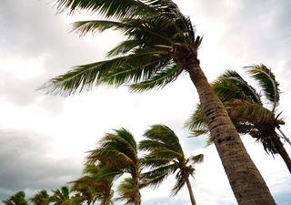 Escalas de Beaufort y Douglas: ¿cómo conocer la fuerza de los vientos?