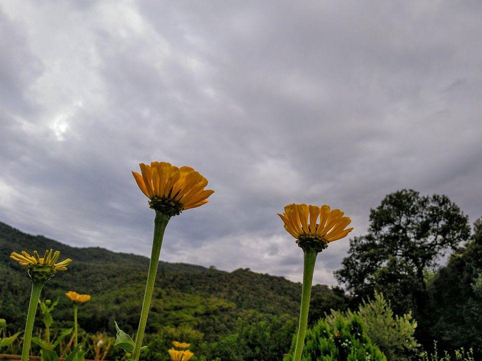 flores agosto