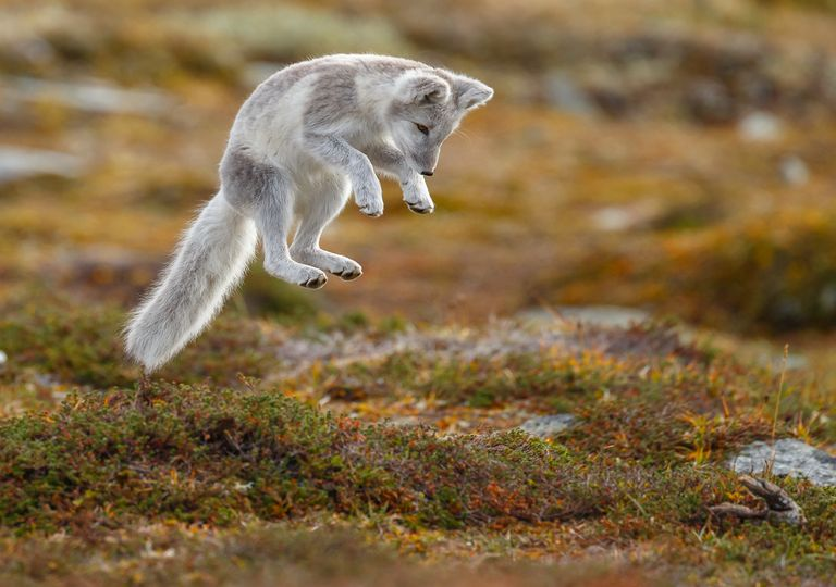 Animais; vida animal; extinção
