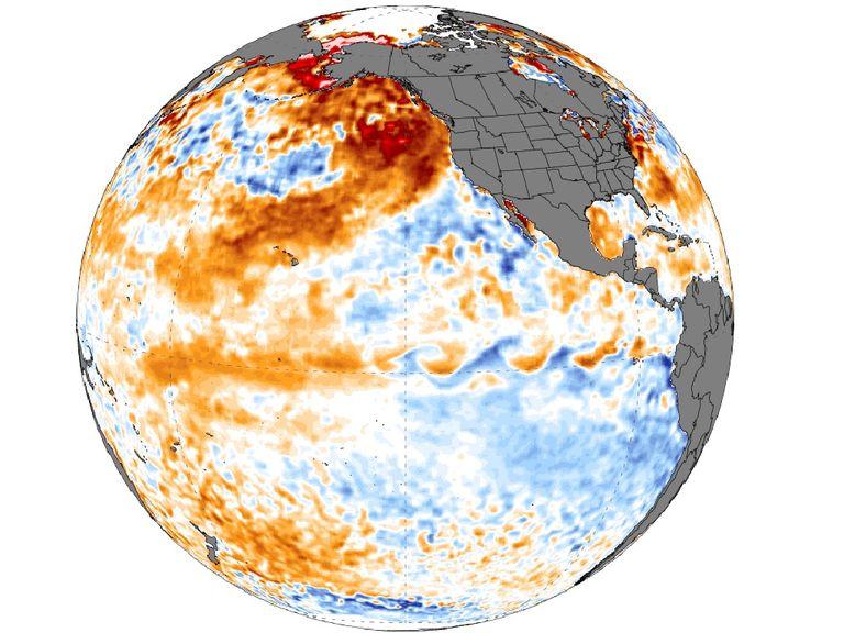 Anomalía de la temperatura superficial del mar. Créditos Climate Reanalyzer