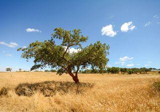 Fevereiro 2020 foi o mais quente em Portugal continental desde 1931