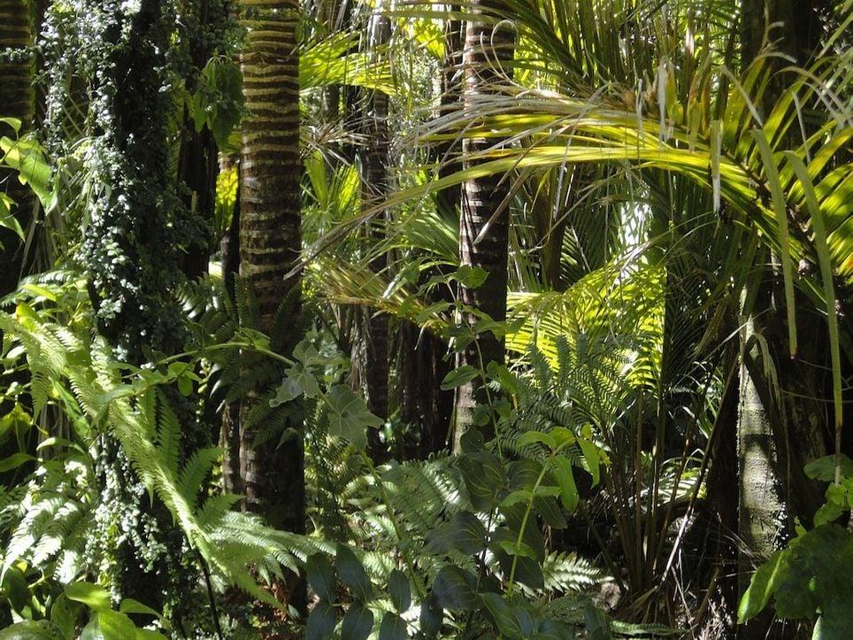 Vegetation in the Amazon.