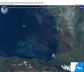 Floración de fitoplancton en el Golfo de Vizcaya