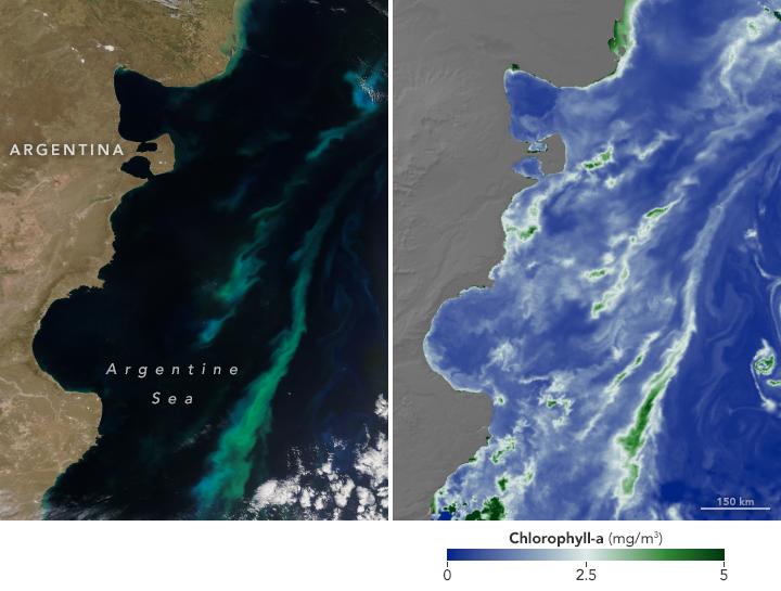 Floración De Verano En El Mar Argentino