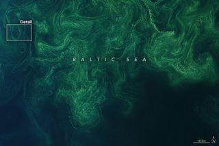 Floración seductora en el mar Báltico