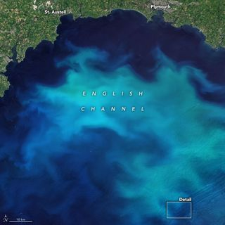 Floraciones de fitoplancton en las aguas alrededor del Reino Unido