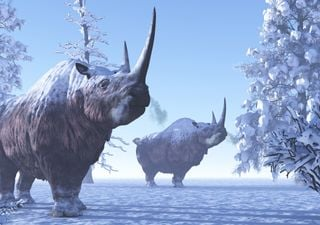 Un rhinocéros laineux vieux de 20 000 ans découvert en Sibérie