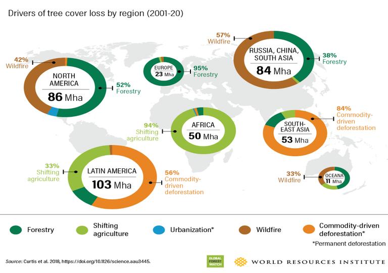 Bosques deforestación cambio climático