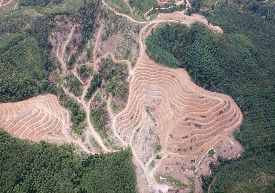 A desflorestação aumentou 12% a nível mundial em 2020