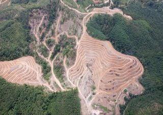 La pérdida de bosques aumentó un 12% en 2020