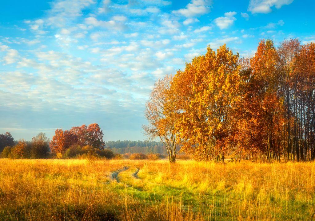 paisagem outonal; outono; sol