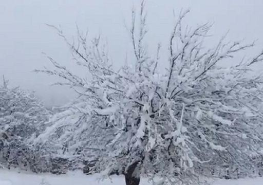Forti nevicate travolgono il Kurdistan: i video