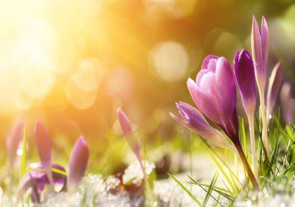 Heißer Frühling