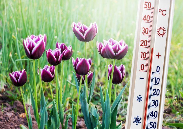 Warmer Frühling?