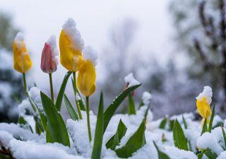 Schnee bis in die Niederungen: Morgen ist Frühlingsanfang!